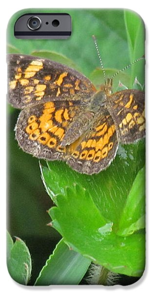 Pearl Crescent Butterfly iPhone Case by Randi Shenkman