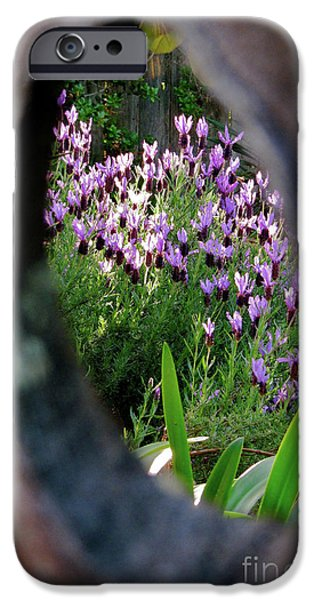 Peephole Garden iPhone Case by CML Brown