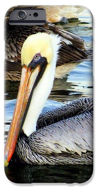 Sea Birds iPhone Cases - Pelican Pete iPhone Case by Karen Wiles