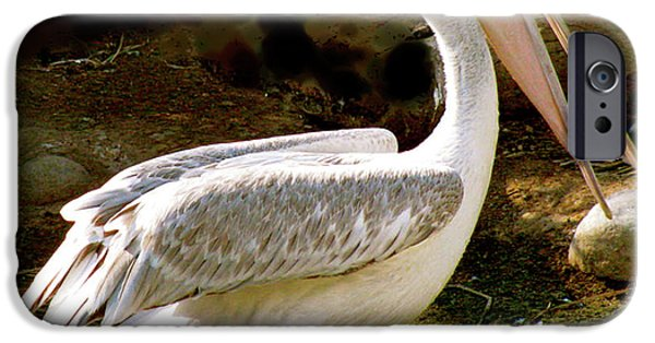Animal Photograph Mixed Media iPhone Cases - Pelican Portal iPhone Case by Debra     Vatalaro