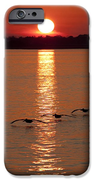 Flying Birds iPhone Cases - Pelican Sunset iPhone Case by Dustin K Ryan