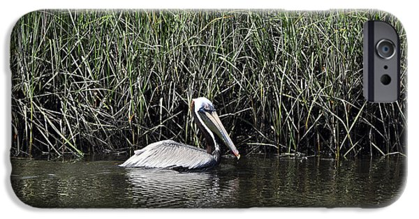 Tidal Creek iPhone Cases - Pelican Swimming iPhone Case by Al Powell Photography USA