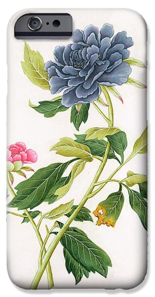 19th Century iPhone Cases - Peony iPhone Case by Georg Dionysius Ehret