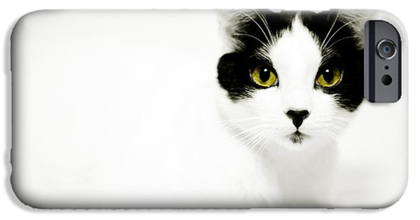 Housecat iPhone Cases - Pepper iPhone Case by Anthony Citro