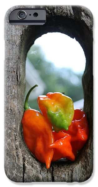 Hot Peppers iPhone Cases - Peppered Fence iPhone Case by Lauri Novak
