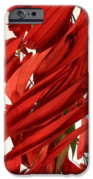Designs In Nature iPhone Cases - Peripheral Streak Image Of A Poinsettia iPhone Case by Ted Kinsman