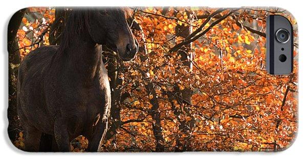 Paso Fino Stallion iPhone Cases - Peruvian stallion iPhone Case by Michael Mogensen