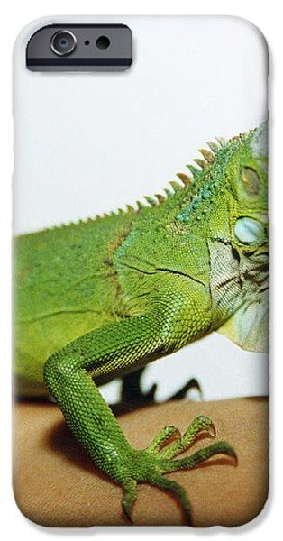 Pet Iguana iPhone Case by Cristina Pedrazzini