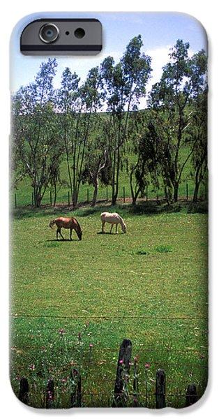 Petaluma Pasture iPhone Case by Kathy Yates