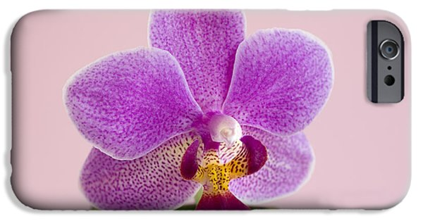 Phalaenopsis iPhone Cases - Phalaenopsis Orchid (phalaenopsis Sp.) iPhone Case by Lawrence Lawry