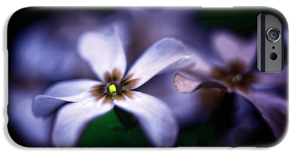 Phlox iPhone Cases - Pheeling Phloxy iPhone Case by Lois Bryan