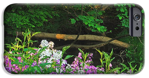 Phlox iPhone Cases - Phlox Along The Creek 7185 iPhone Case by Michael Peychich