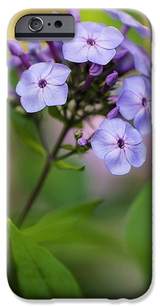 July iPhone Cases - Phlox Paniculata iPhone Case by Maria Mosolova