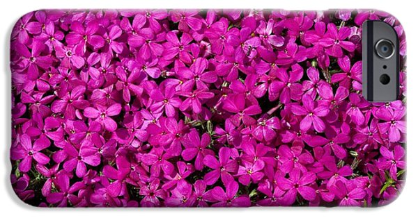 Phlox iPhone Cases - Phlox Subulata iPhone Case by Bob Gibbons