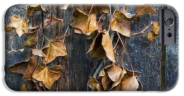 Vine Leaves iPhone Cases - Photograph of some dead leaves and vines hanging on a wooden fence iPhone Case by Randall Nyhof
