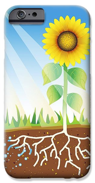 Photosynthesis, Artwork iPhone Case by David Nicholls