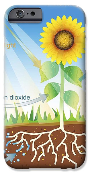 Energy Conversion iPhone Cases - Photosynthesis, Illustration iPhone Case by David Nicholls