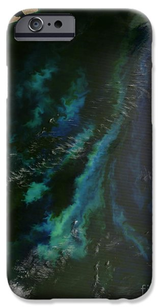 Phytoplankton iPhone Cases - Phytoplankton Off Argentinas Coast iPhone Case by Nasa