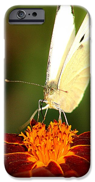 Pieris brassicae iPhone Case by Emanuel Tanjala