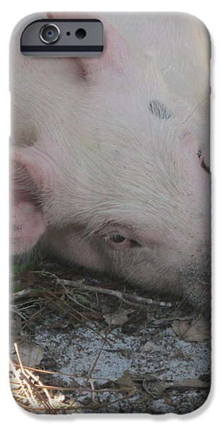 Pig in a Pen 4 iPhone Case by Cathy Lindsey