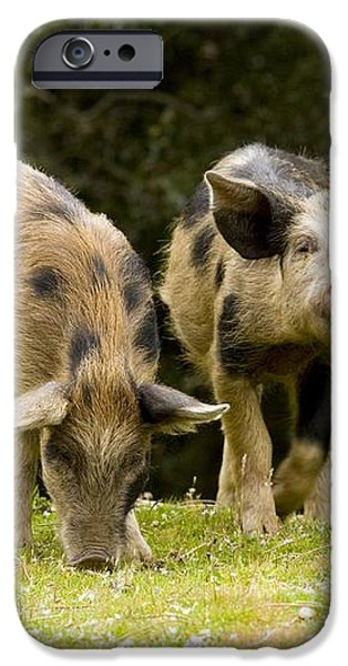 Piglets Foraging In Woodland iPhone Case by Bob Gibbons
