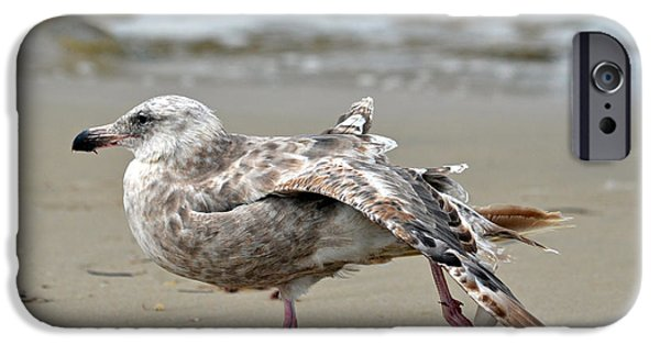 Seagull iPhone Cases - Pilates On The Shore iPhone Case by Fraida Gutovich