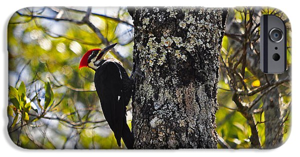 Animals Photographs iPhone Cases - Pileated Woodpecker iPhone Case by Al Powell Photography USA