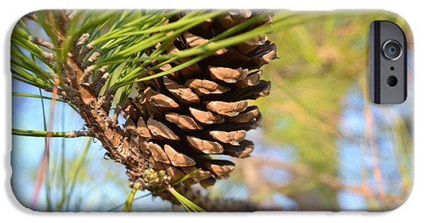 Pines iPhone Cases - Pine Cone iPhone Case by Carman Turner
