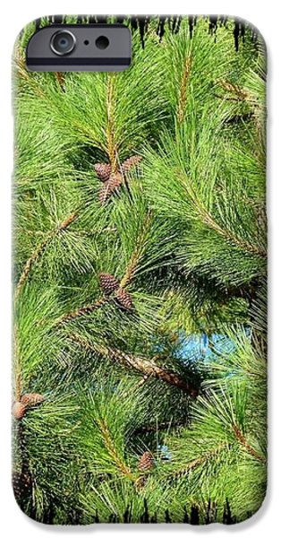 Pine Cones And Needles iPhone Case by Will Borden