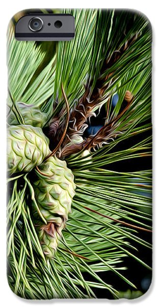 Pine Cones in a Pine Tree iPhone Case by Bill Cannon