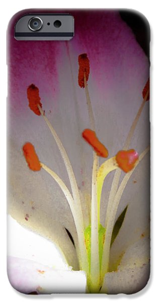 Pink and White Lily iPhone Case by David Patterson