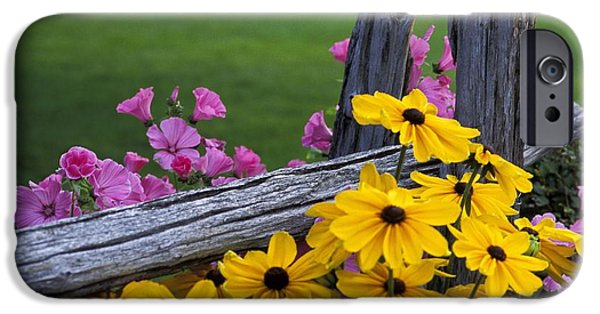 Floral Photographs iPhone Cases - Pink And Yellow Flowers iPhone Case by David Chapman