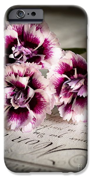 Antiques iPhone Cases - Pink Cloves iPhone Case by Jan Bickerton