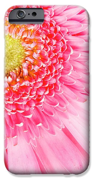 Pink Delight II iPhone Case by Tamyra Ayles