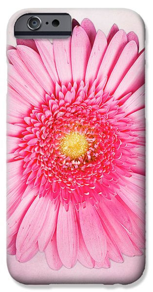 Pink Delight iPhone Case by Tamyra Ayles