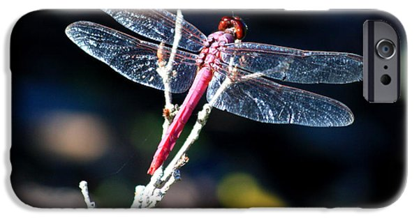 Sparking iPhone Cases - Pink Dragonfly iPhone Case by Carol Groenen