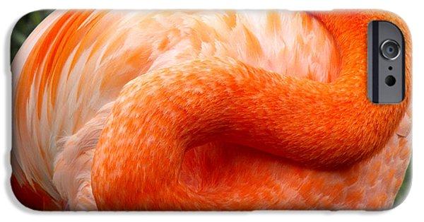 Flamingo iPhone Cases - Pink Flamingo sleep iPhone Case by Rebecca Margraf