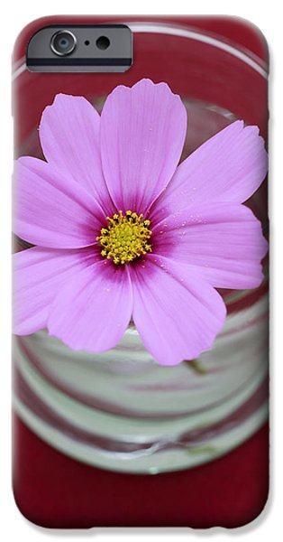 Pink Flower iPhone Case by Frank Tschakert