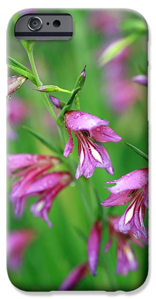 Pink flowers of Gladiolus Communis iPhone Case by Frank Tschakert