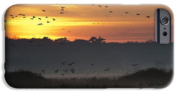 Fowl iPhone Cases - Pink footed geese at Holkham Norfolk UK iPhone Case by John Edwards
