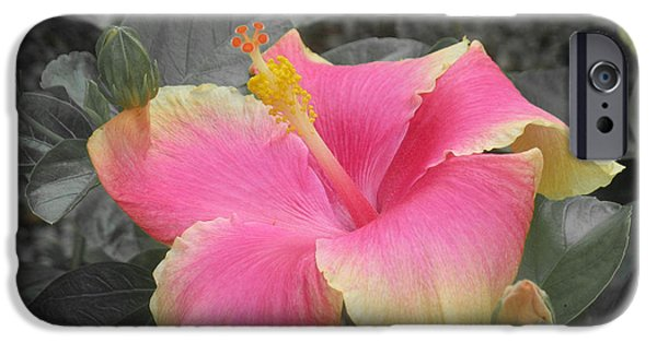 Pastel Pyrography iPhone Cases - Pink Hibiscus  iPhone Case by Mira Dimitrijevic