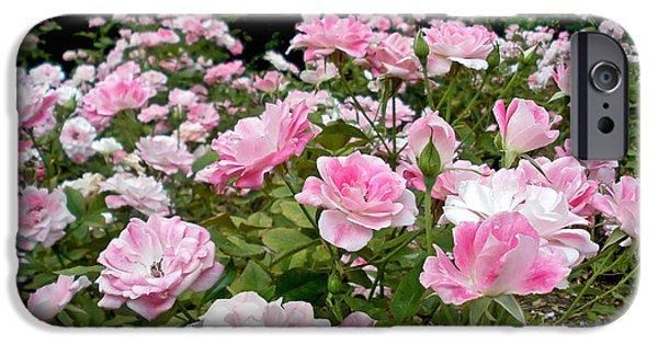 Floribunda iPhone Cases - Pink Iceberg Roses iPhone Case by Kaye Menner