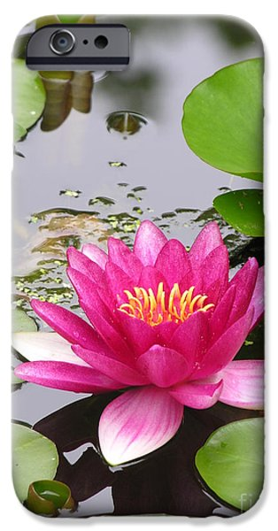 Floral Photographs iPhone Cases - Pink Lily Flower  iPhone Case by Diane  Greco-Lesser