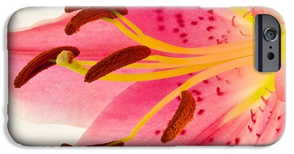 Asiatic Lily iPhone Cases - Pink Lily Square Version iPhone Case by Bill Swindaman