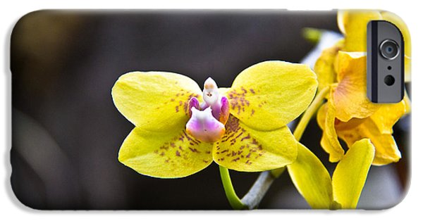 Langlois iPhone Cases - Pink On Yellow iPhone Case by Darren Langlois