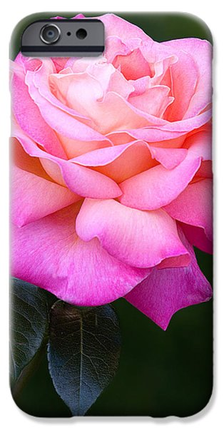Botany iPhone Cases - Pink Petals iPhone Case by Susan Candelario