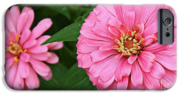 Zinnias iPhone Cases - Pink Posy Pano iPhone Case by Andee Design