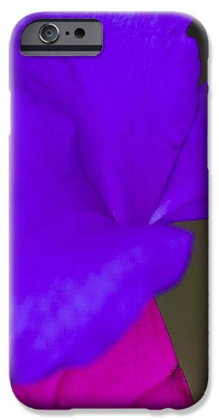 Pink Quill iPhone Case by Heiko Koehrer-Wagner
