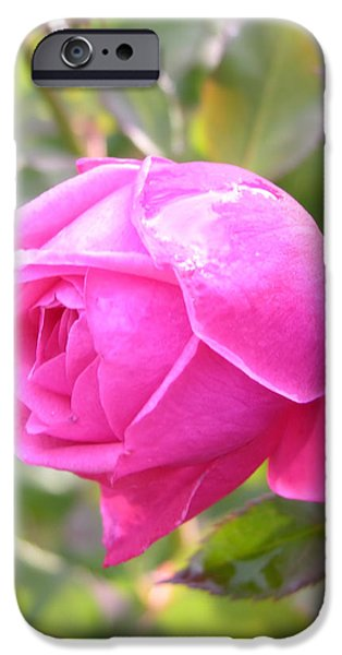 Rainy Day iPhone Cases - Pink Rose with Raindrop iPhone Case by Carol Groenen