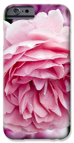 Pink Roses iPhone Case by Frank Tschakert